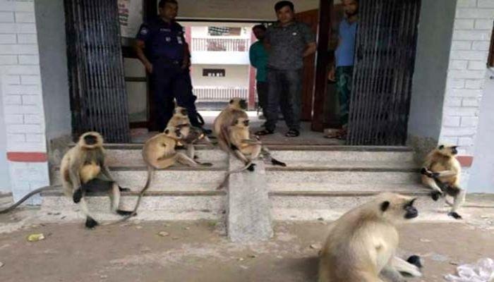 বাচ্চাকে মারধর: অভিযোগ নিয়ে যশোর থানায় হনুমানের দল