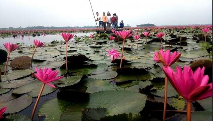 লাল শাপলার হাওর, সুনামগঞ্জ, তাহিরপুর