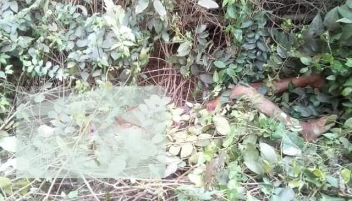 জয়পুরহাটে ভ্যান চালকের গলাকাটা লাশ উদ্ধার